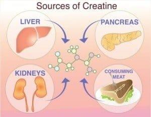 Creatine sources