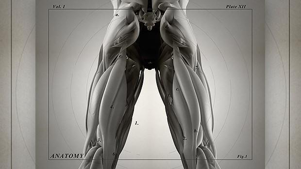 Hamstrings Anatomy